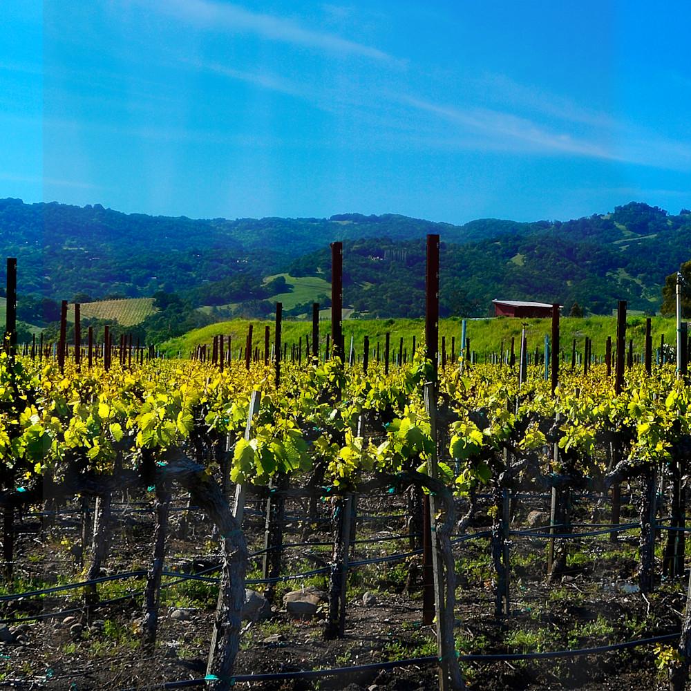 dsc2222 sonoma vineyard kbfl78