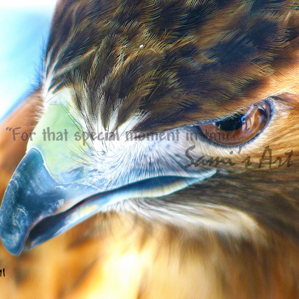 Redtailedhawk bgikwa