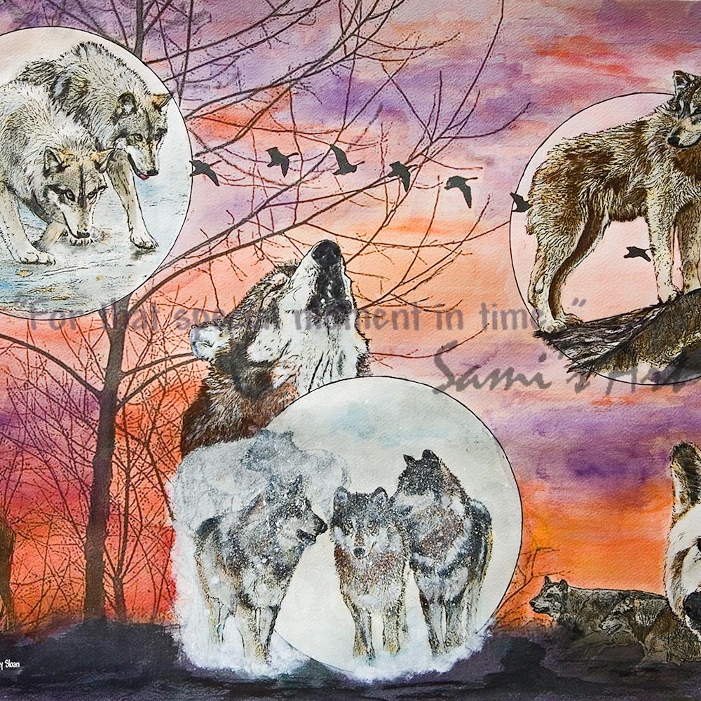 Wolfparkinthespotlight nblar5