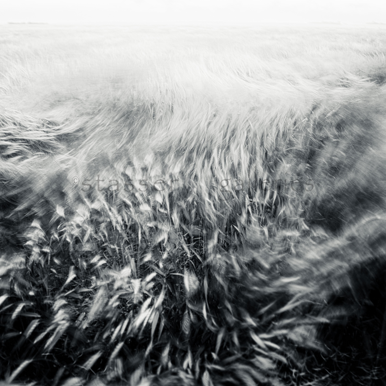 Crashing waves four glev6z