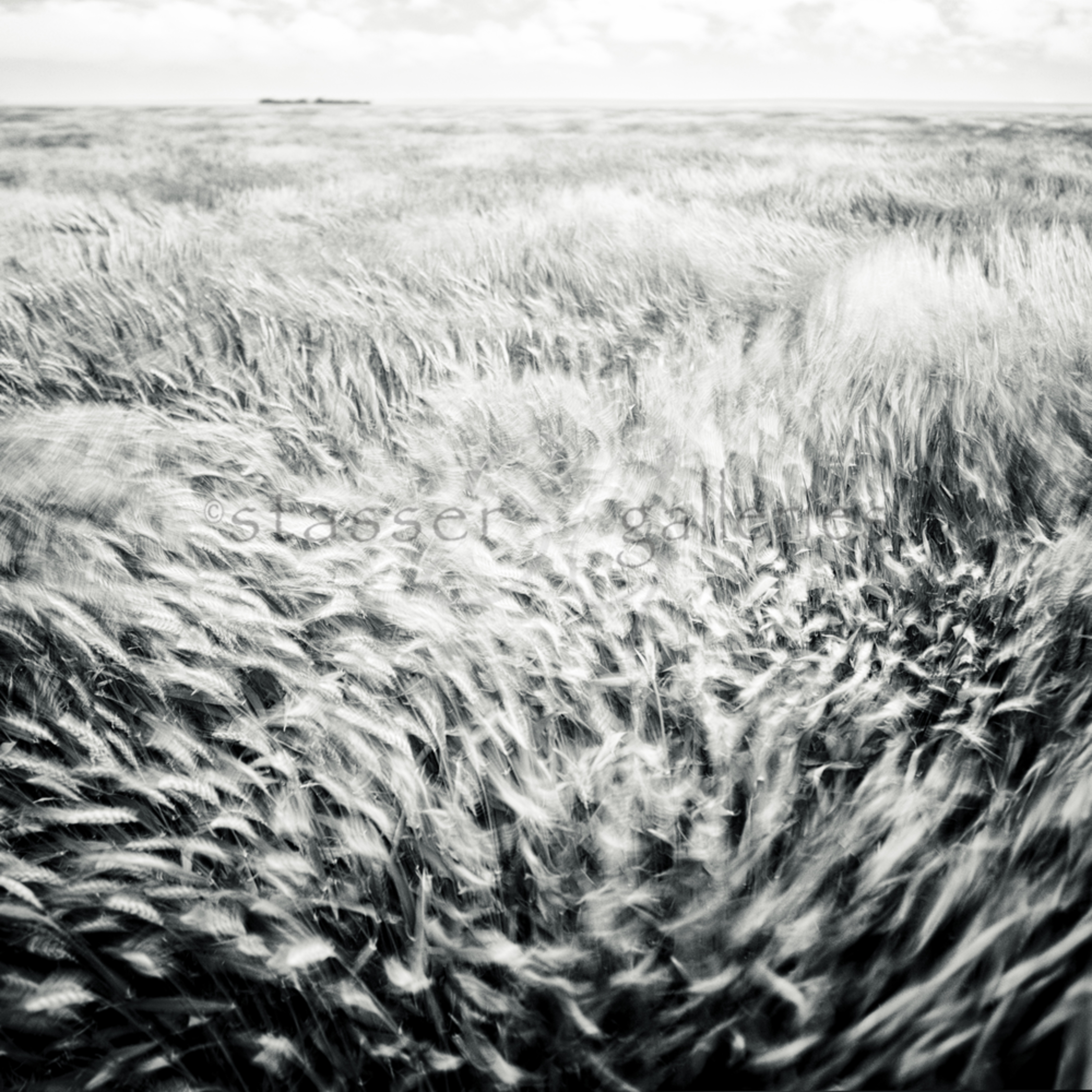 Waves of wheat two pkriej