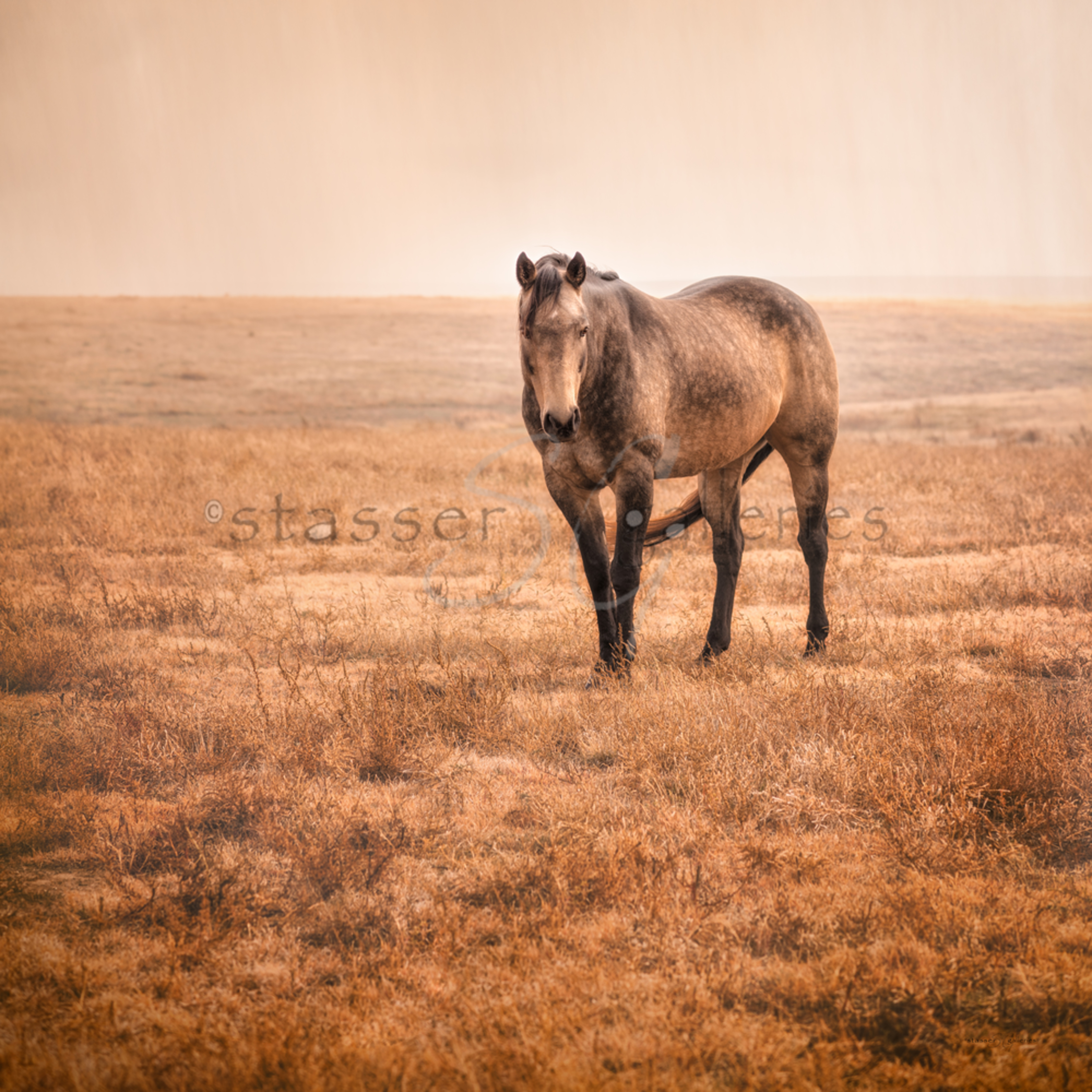 Horse with no name plsv9f