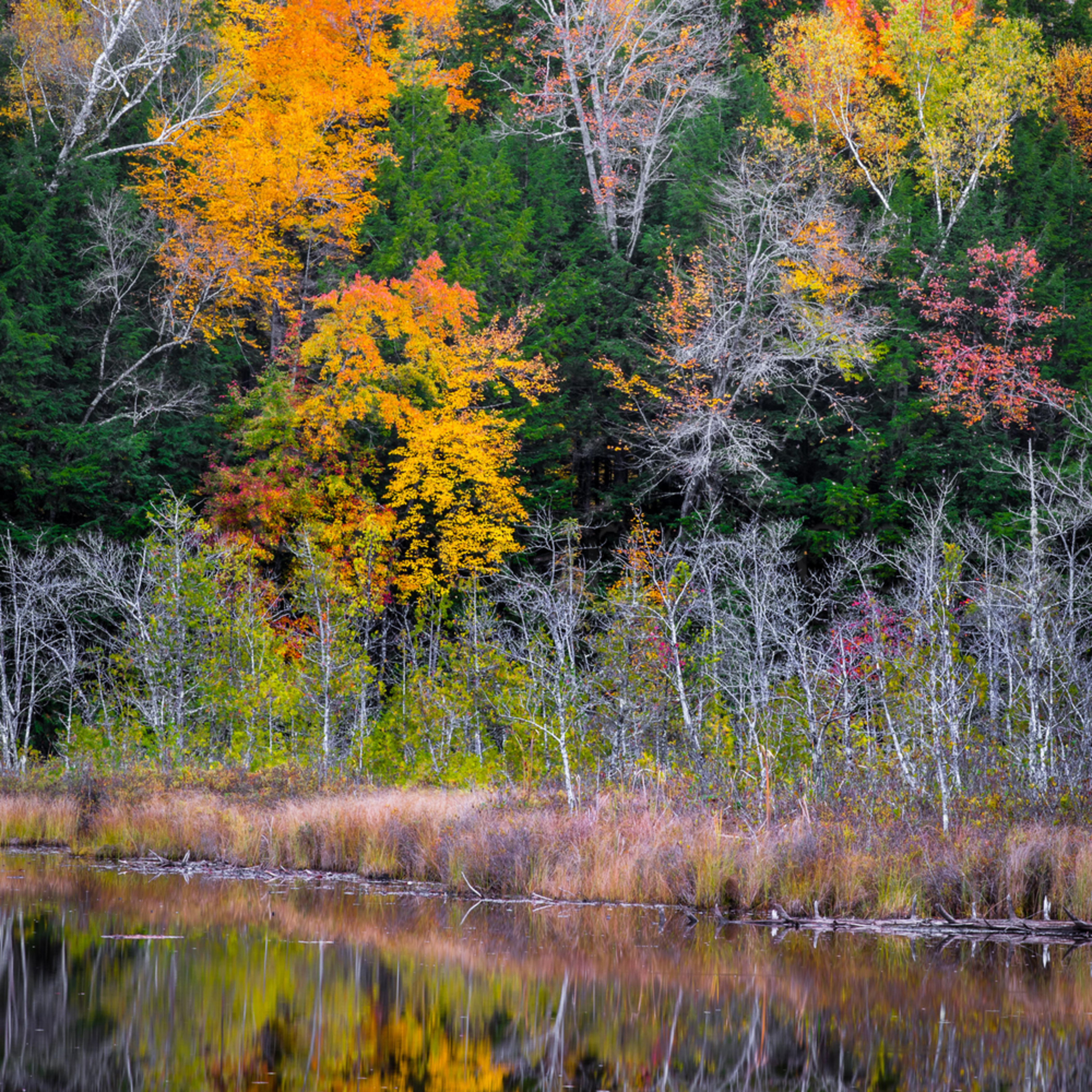 Vt fall colors nzzmyl