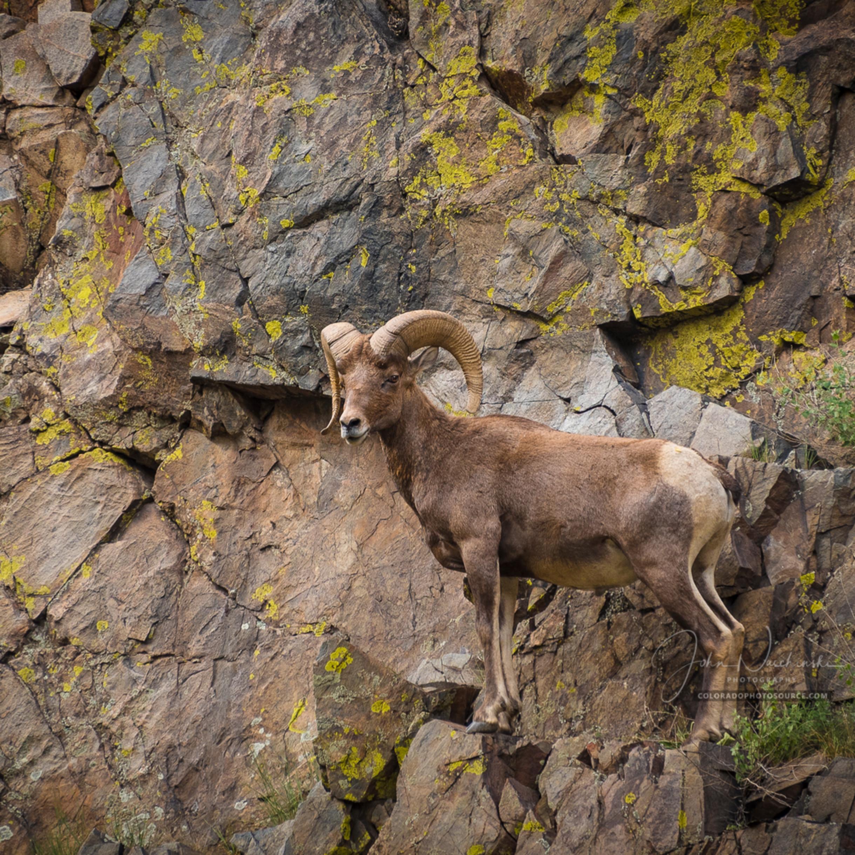 Colorado photosdsc 1025 2 kubyft