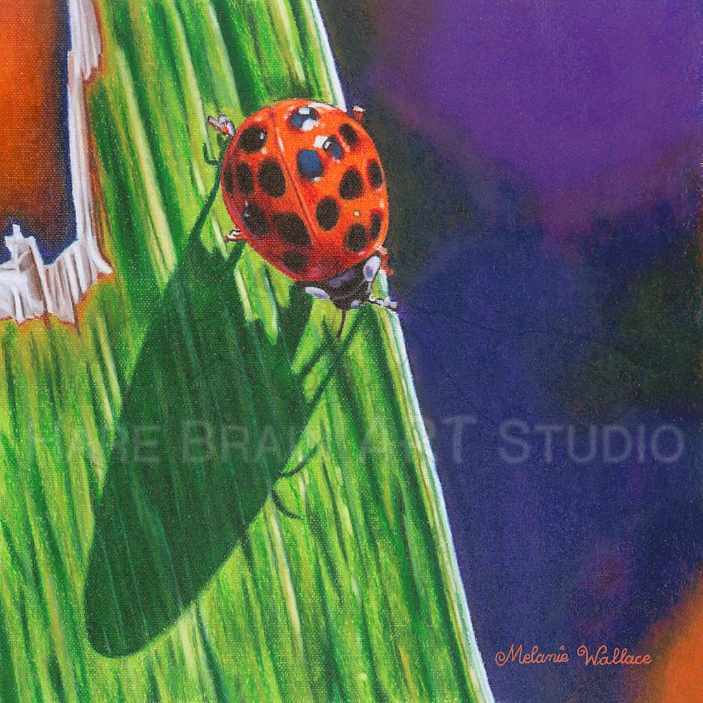 Melanie ladybug 6x6 rgb ibasac