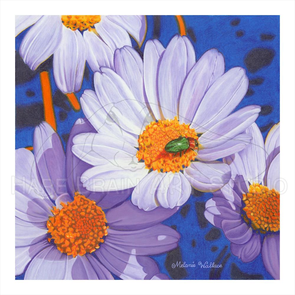 Melanie daisies 12x12 rgb pw5i7f