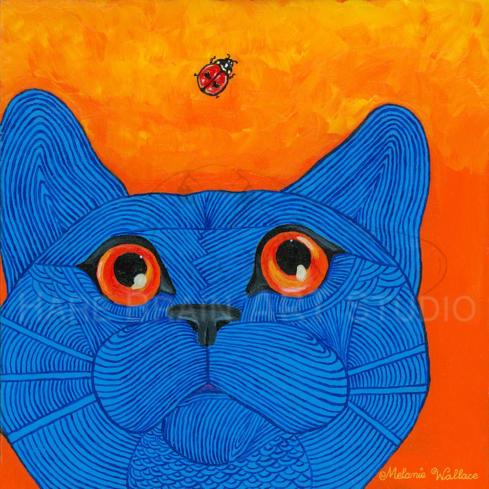 Nola ladybug cat 6x6rgb tixoql