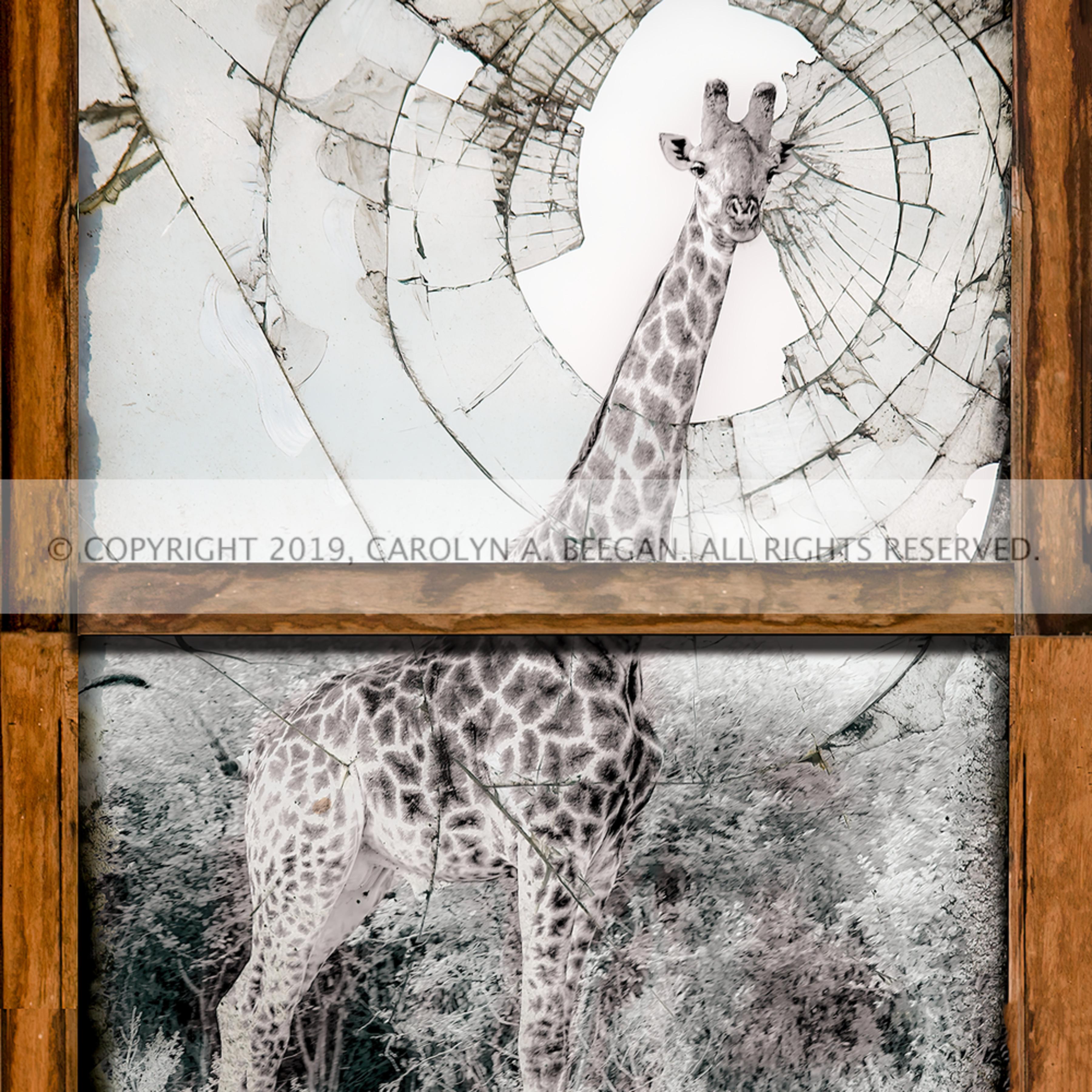 Giraffe window 002 1476553598 smaller sharpen jstsj1
