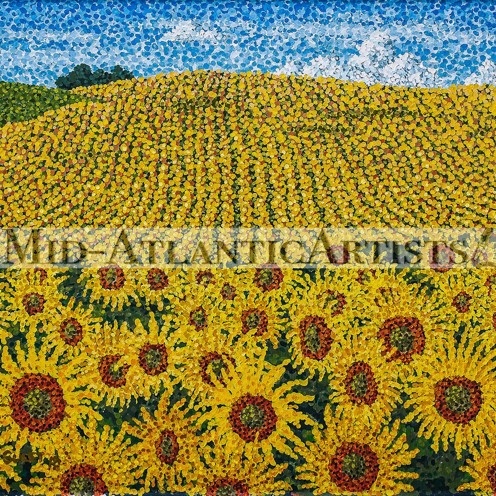 Sms 031 field of sunflowers sbjhoy