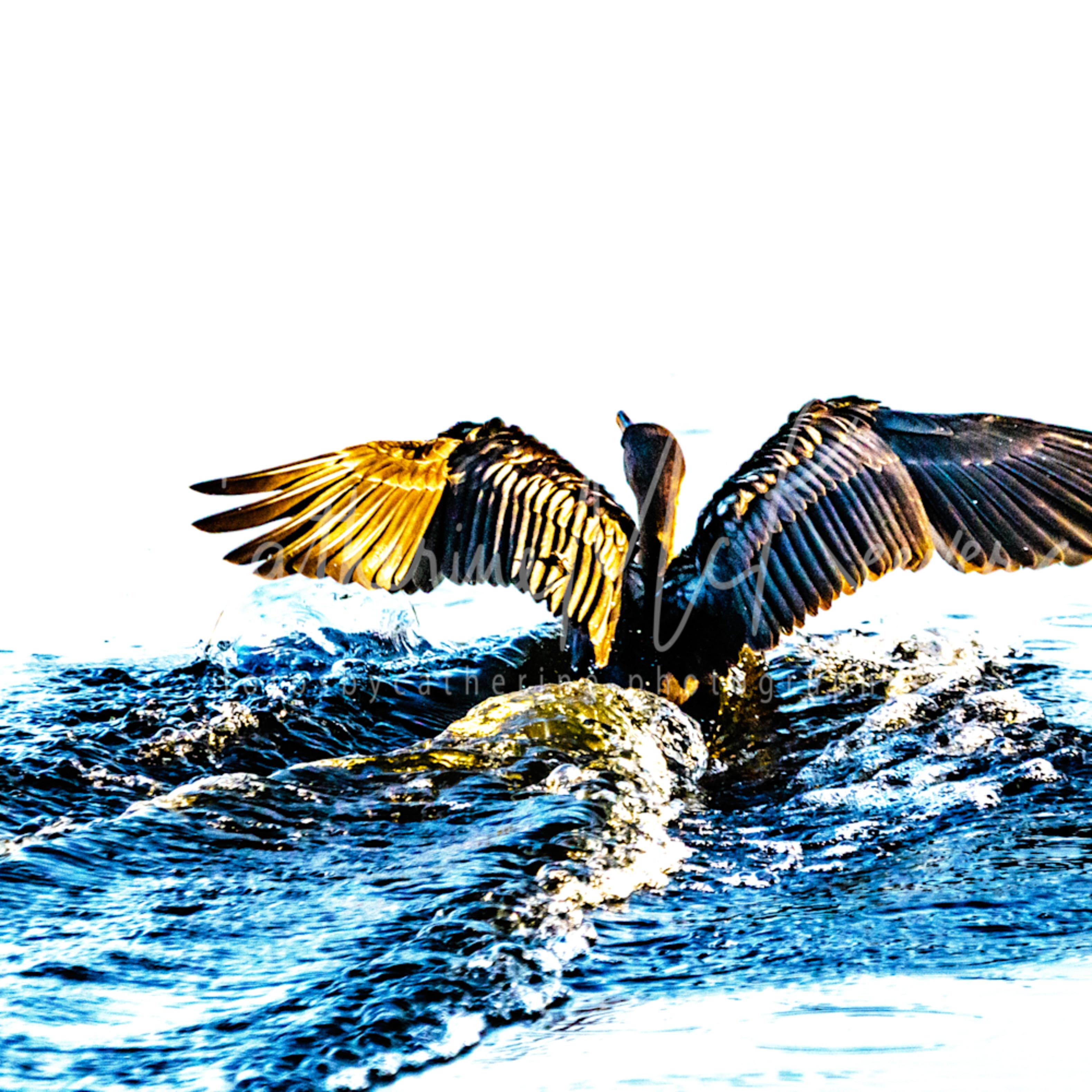 Splash landing jkzqbd