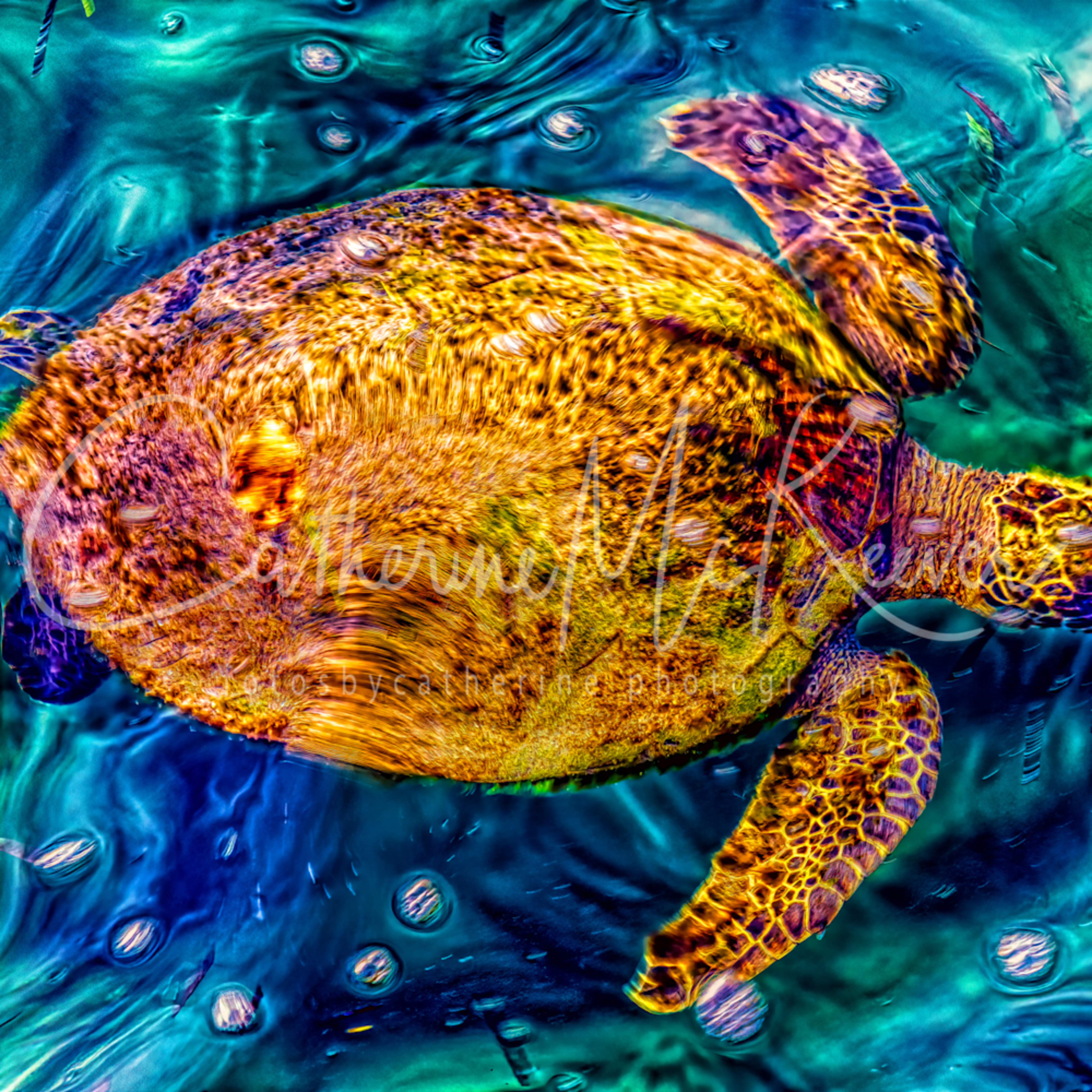 Happy turtle tfti0l