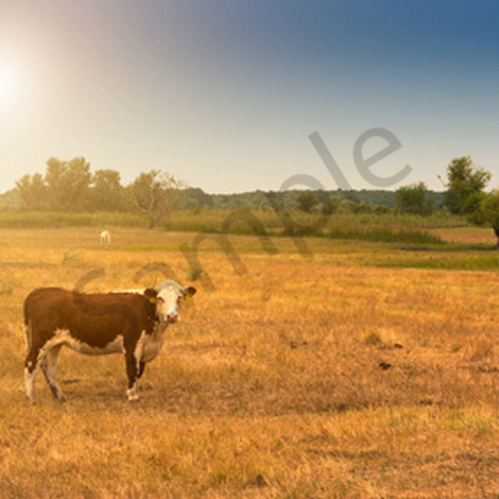 Watson ranch6 pzz3q9