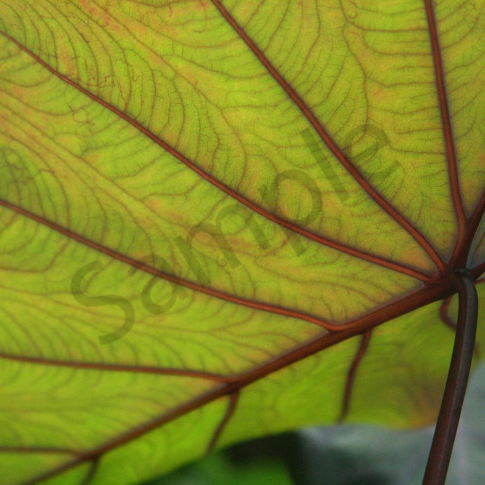 Natures texture dd1910 csmce8