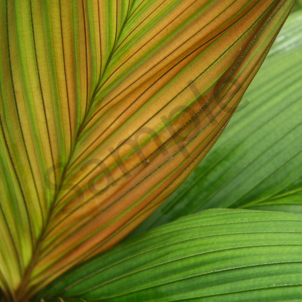 Gold palm patterns dd3210 bhmzon