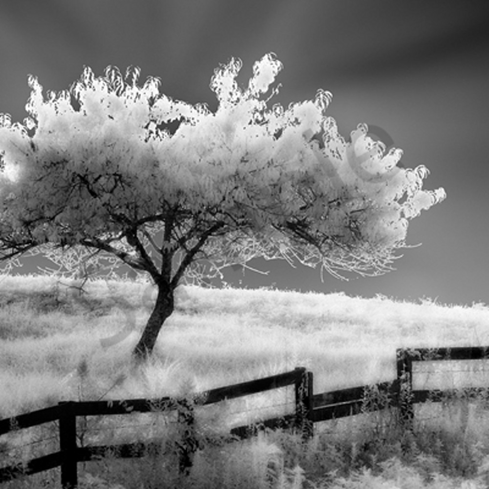 Ethereal tree sjzj8q