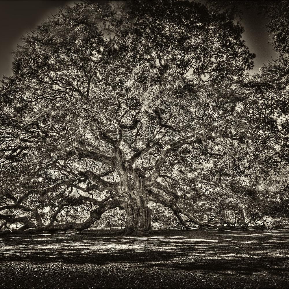 Angel oak   sepia gv15kw