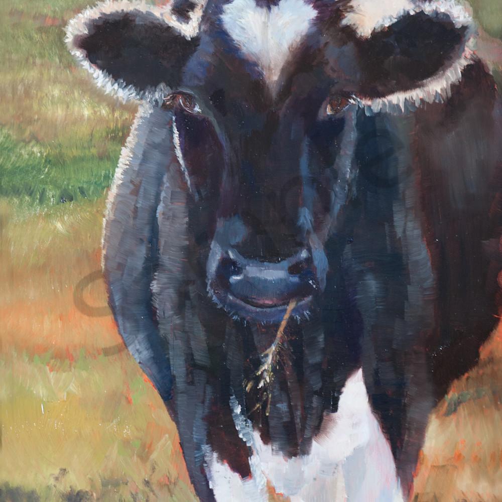 Holstein sweetheart xa1avz