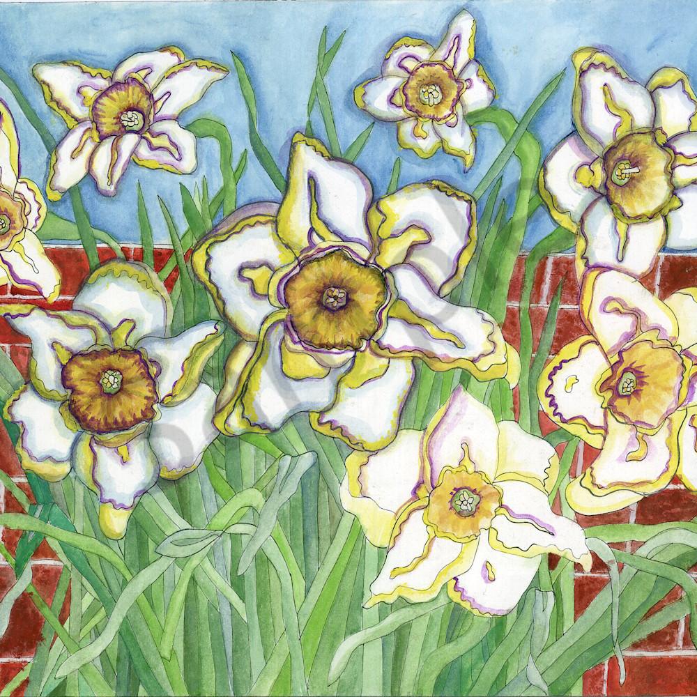 Daffodil universe htuppu