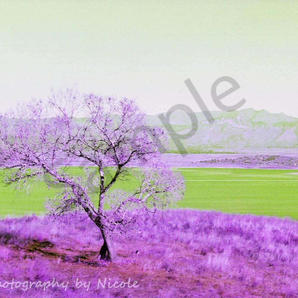 Enhanced lake henshaw by nicole ramirez ce5653