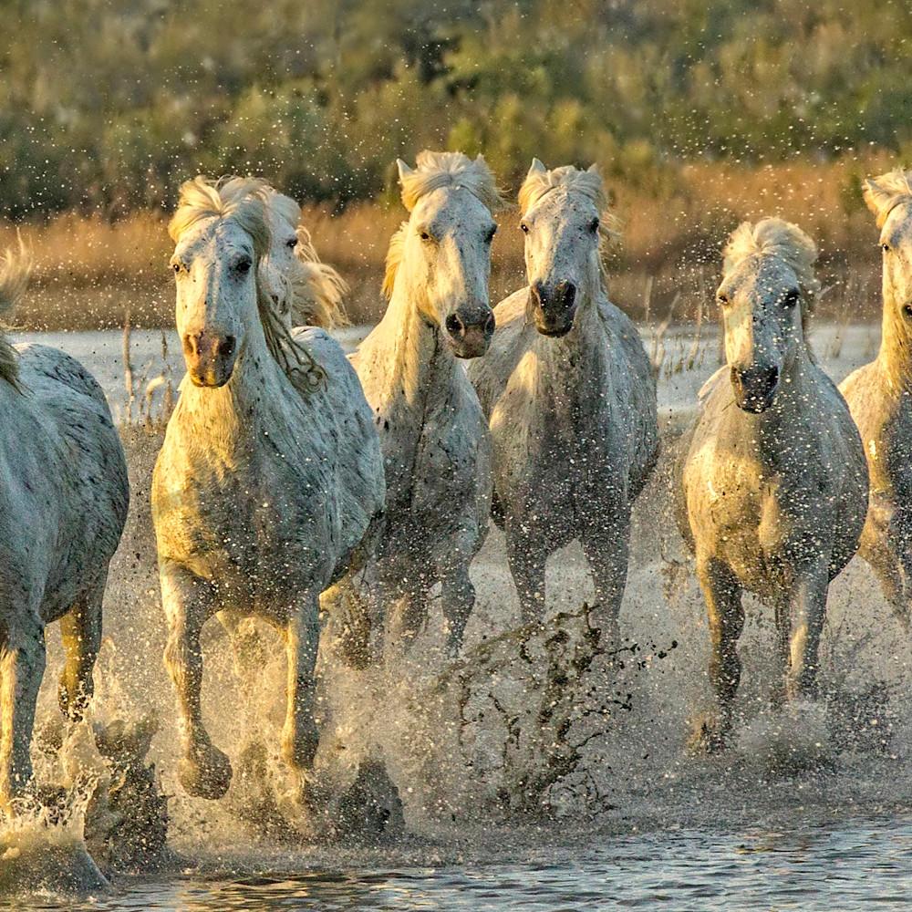 Horsepower pyji1p