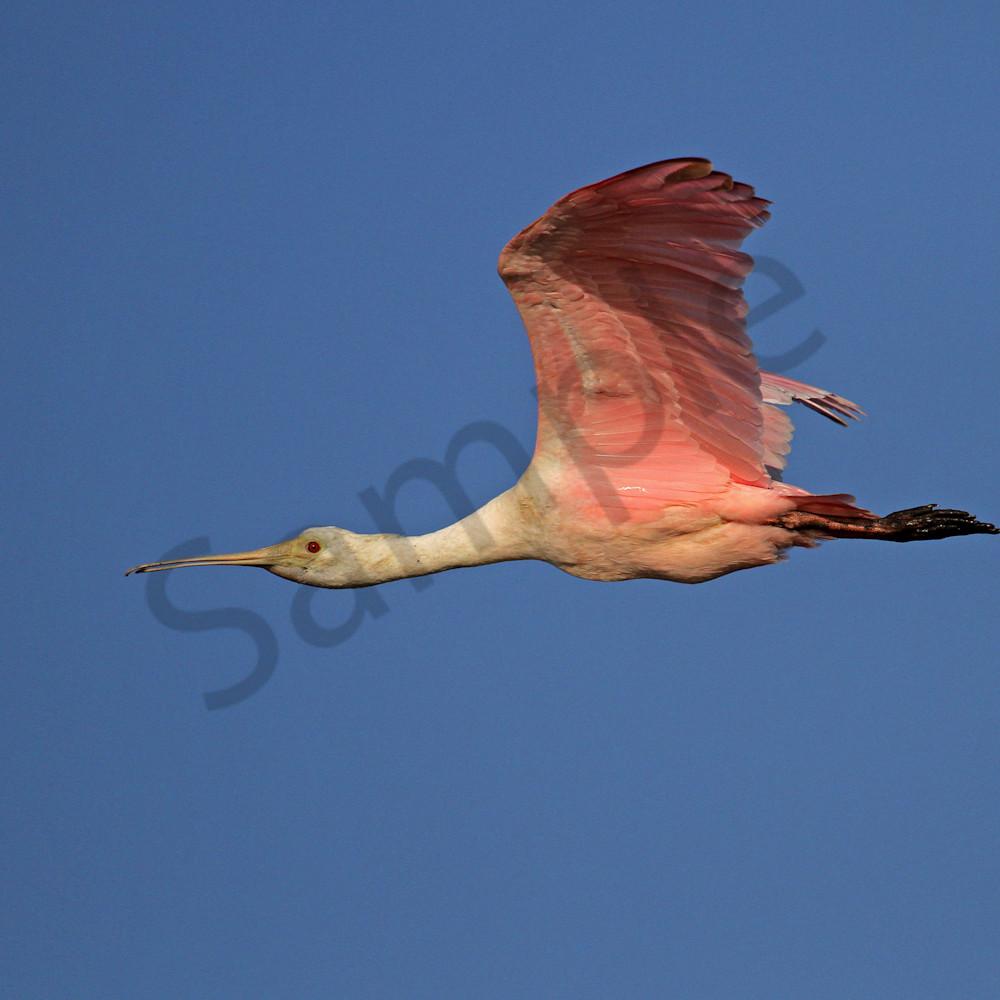 Flying high calpkm