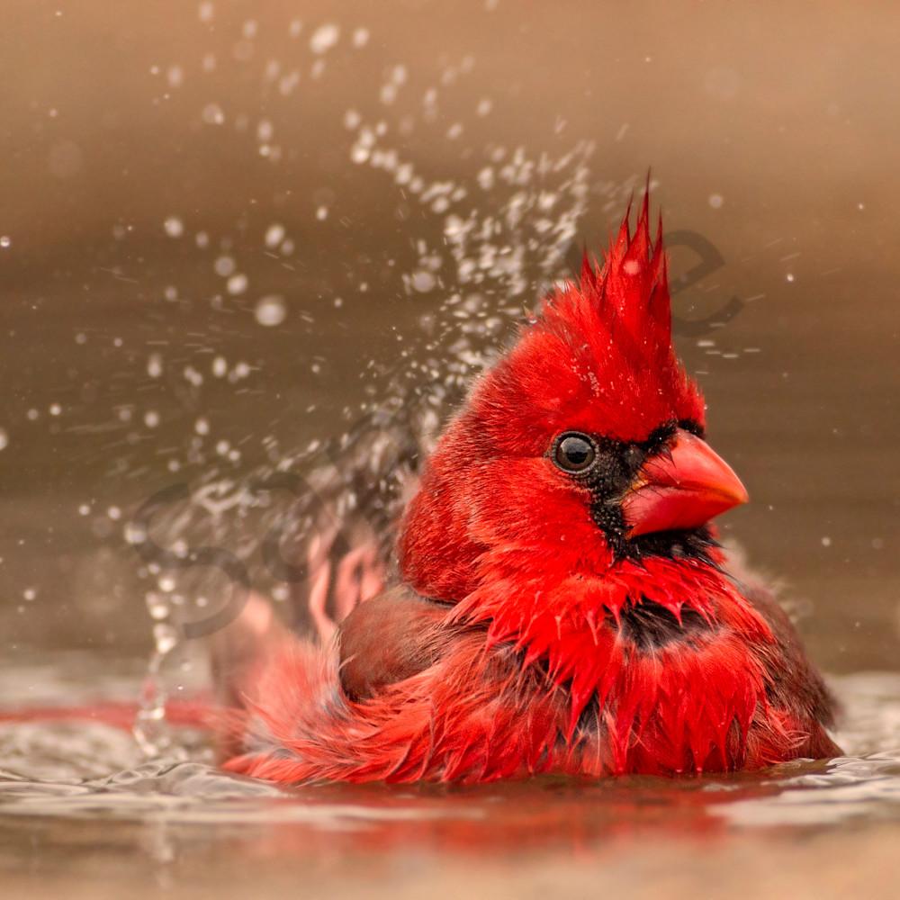 Splish splash no noise copy s3vbzv