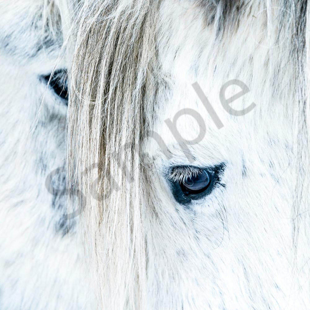 2 white horses yha5yy