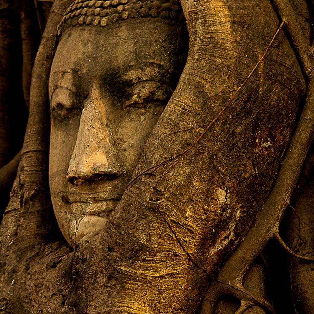 Buddha in tree b8ocxb