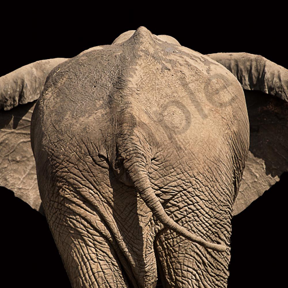 Elephant rear efcbd2