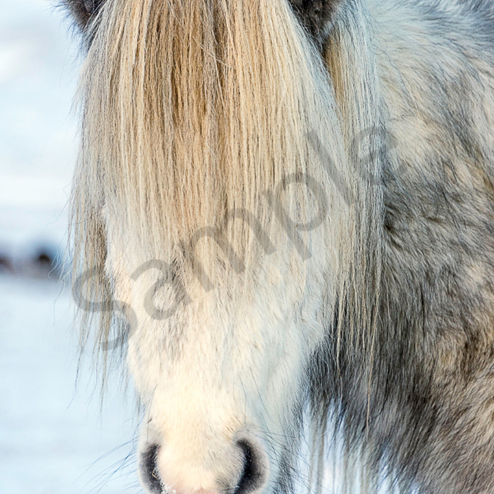 No eyes horse ricdlw