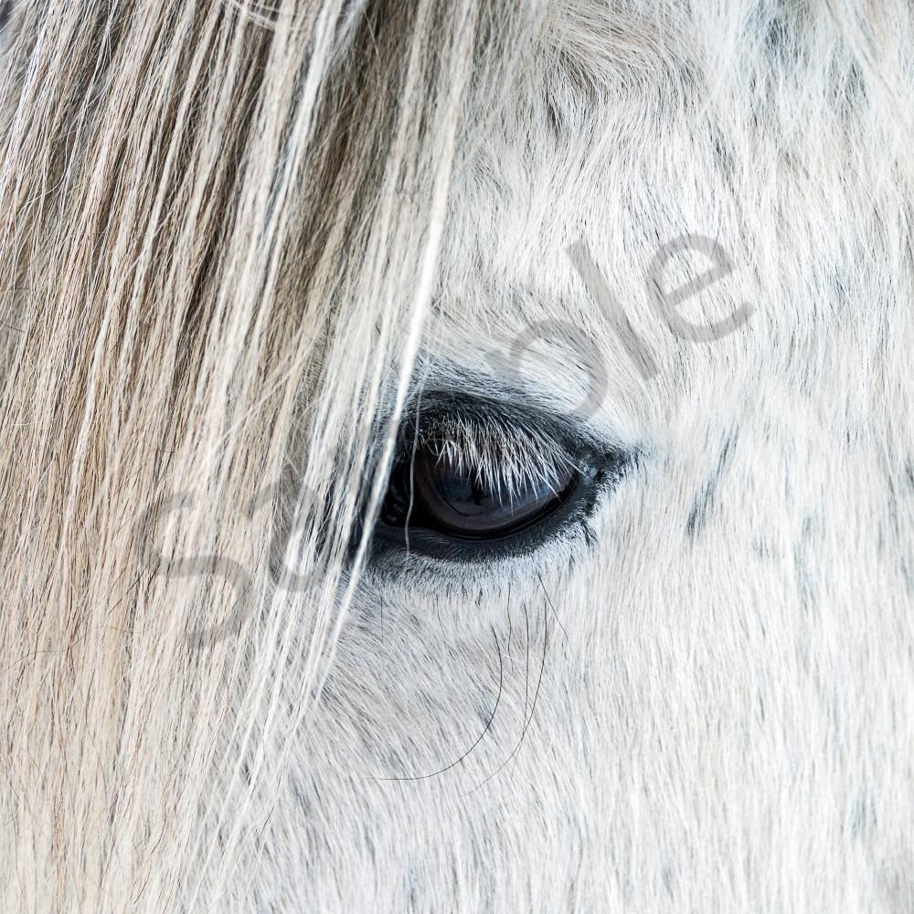 One eye white horse square uav69v
