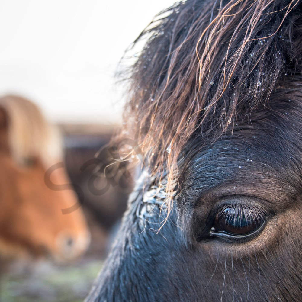 Black horse eye 2 background rnfklk