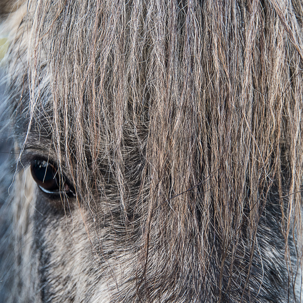 Gray horse one eye jba8xr