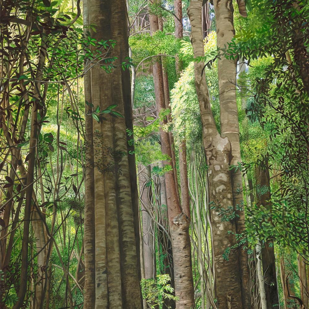 Krig 006 rainforest mlcnrm