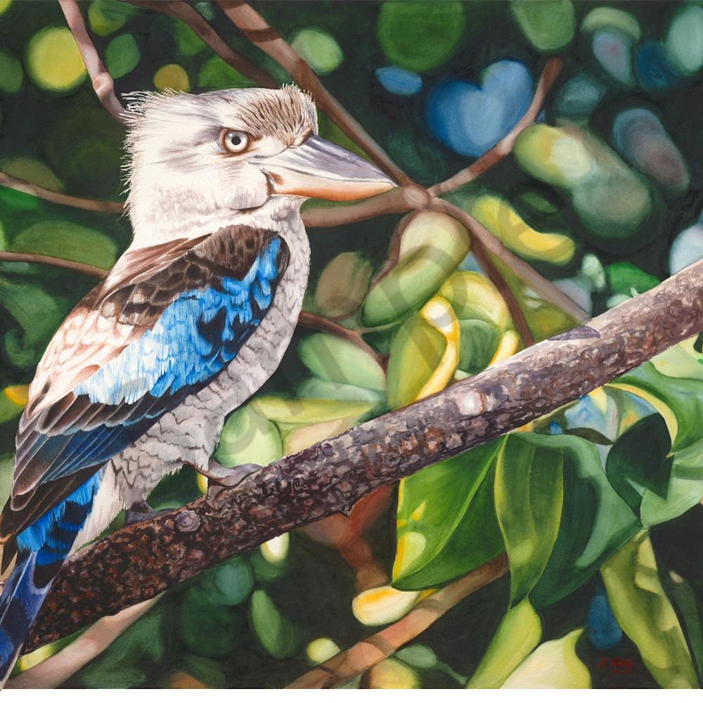 Krig 008 blue winged kookaburra c2oatt