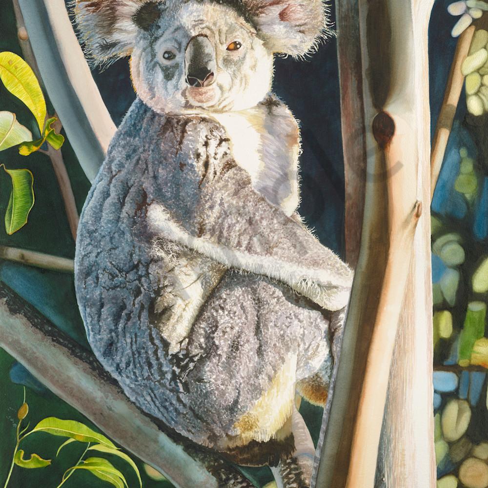 Krig 005 koala nbsjbj