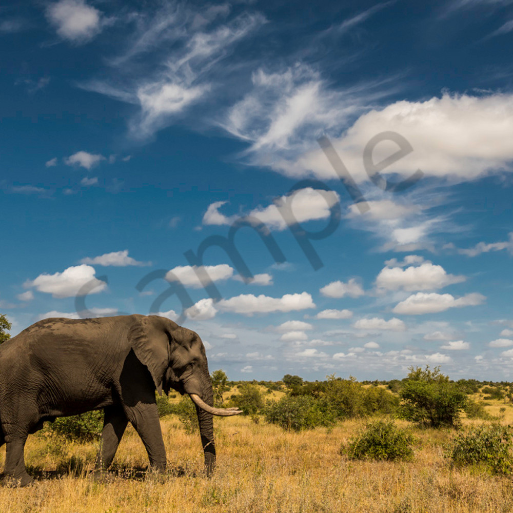 Elephant blue sky f08ilo