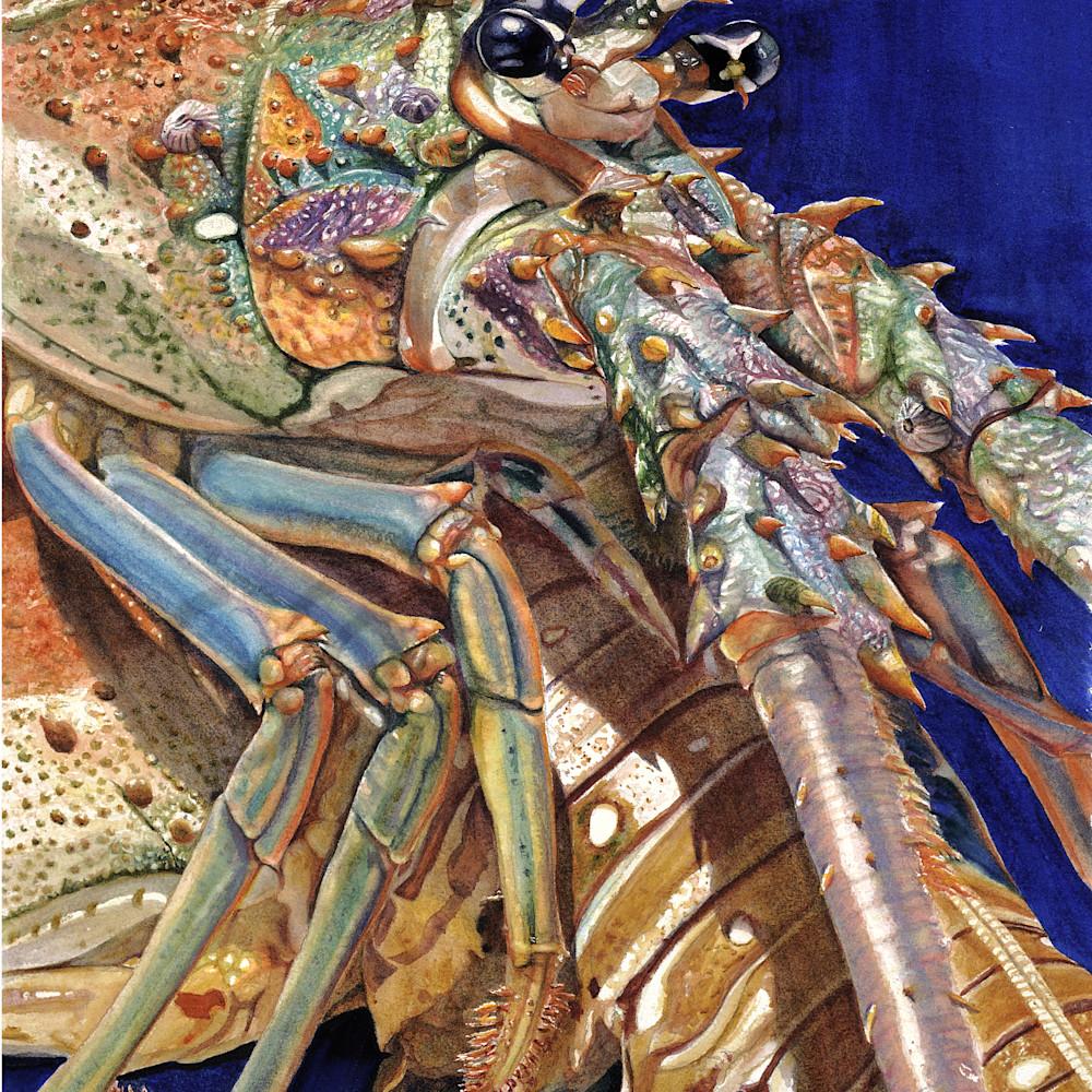 2 lobster rodeo p52qim