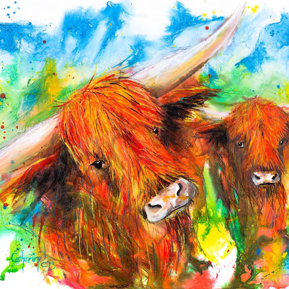 C clark dowden 018 highland cows 1 xfzu6w