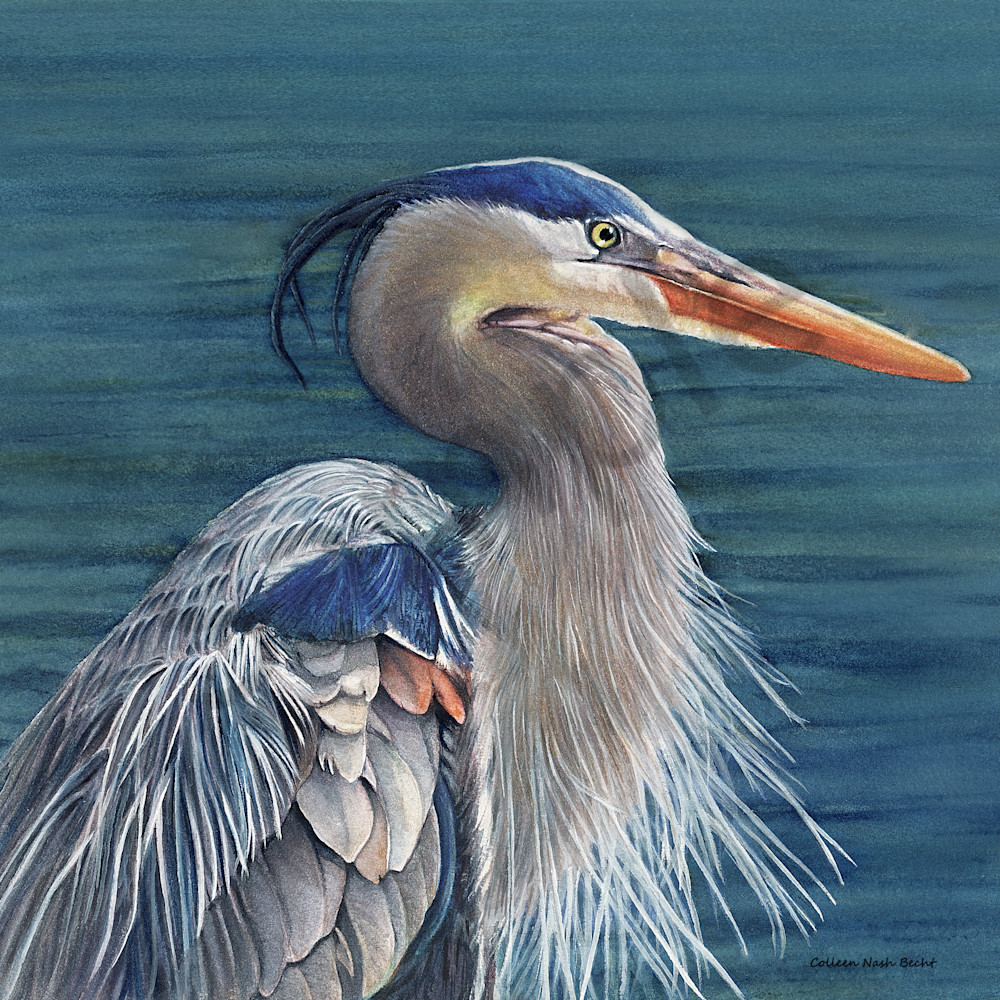 Blue heron psxfhf