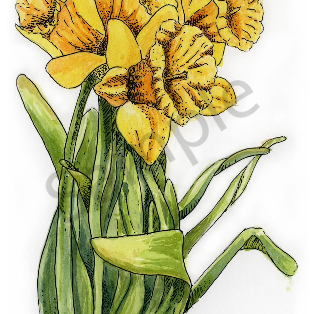 March   daffodil bhf2u1