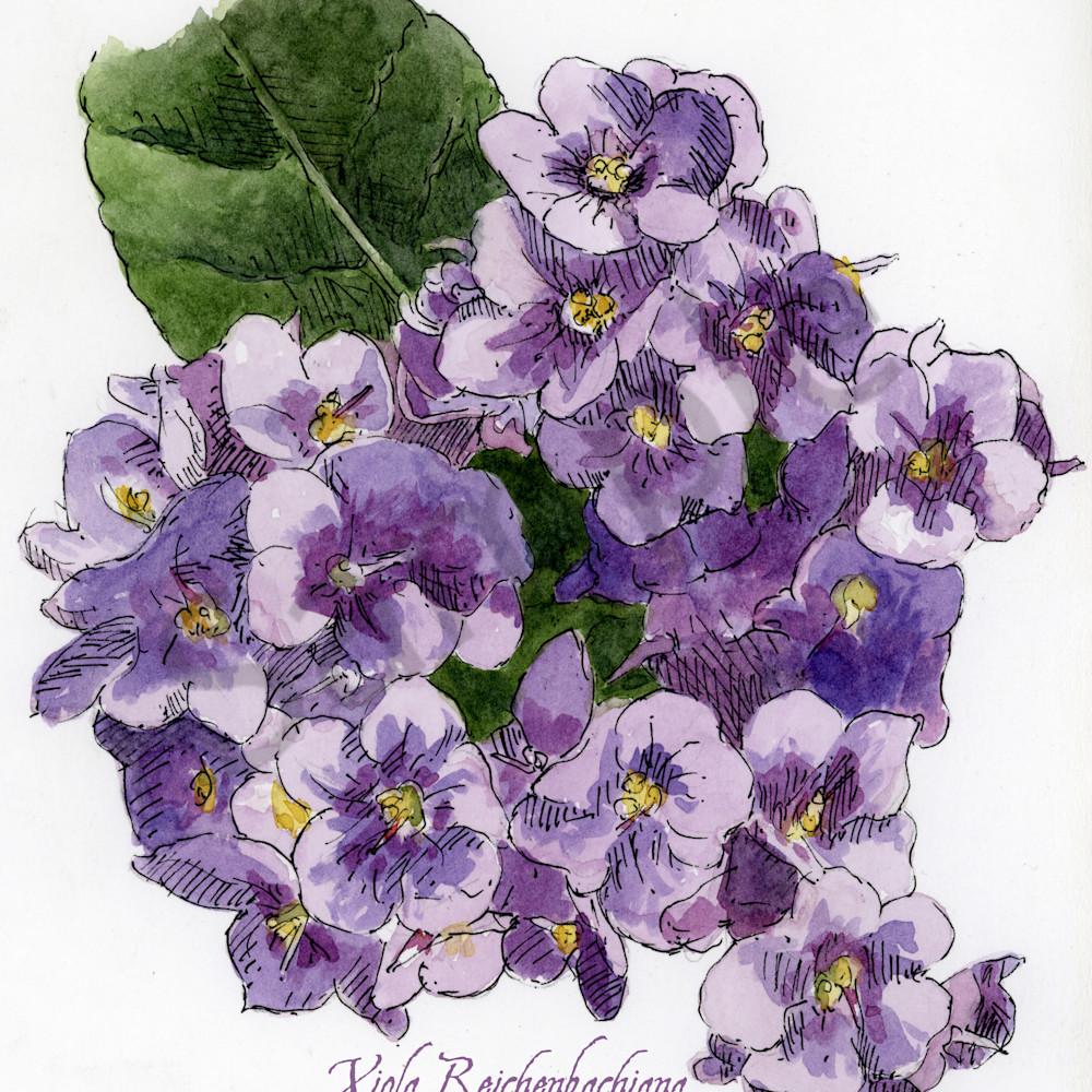 Feb violet vy3pl1
