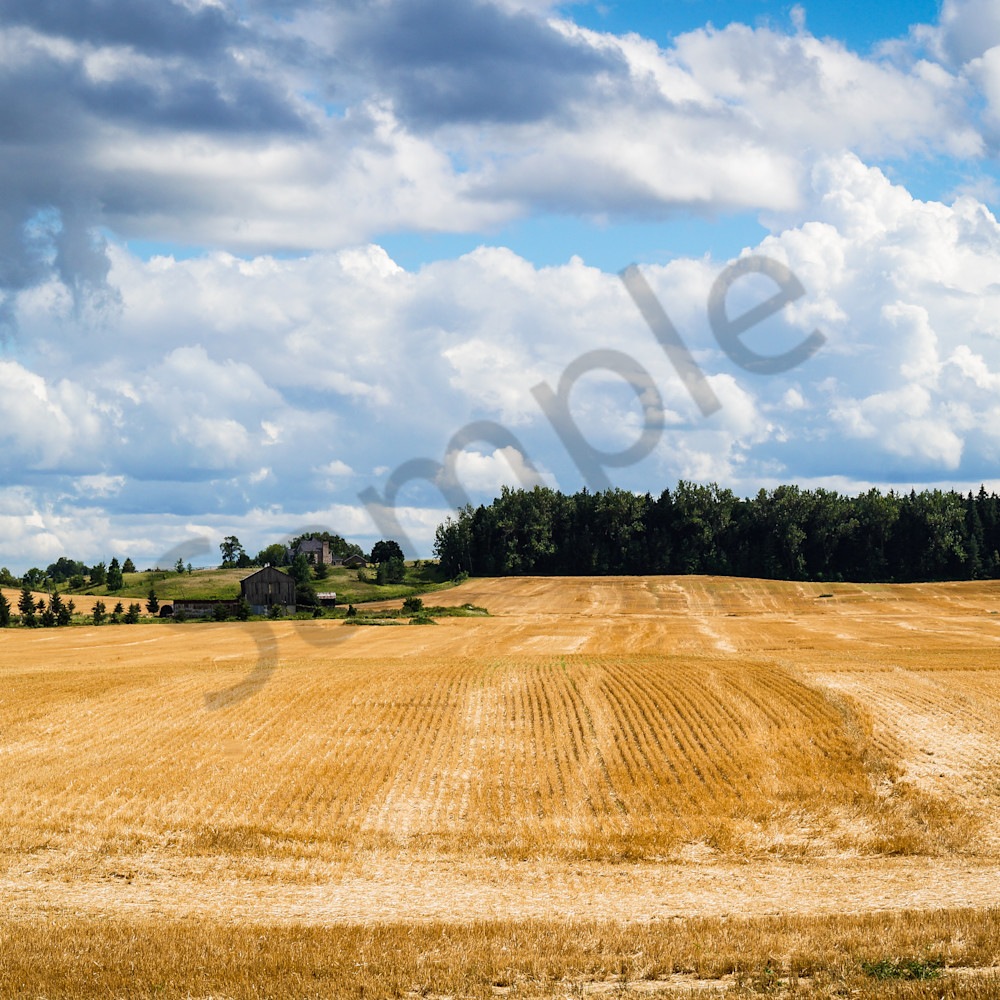 Summer wheat fields diec7c