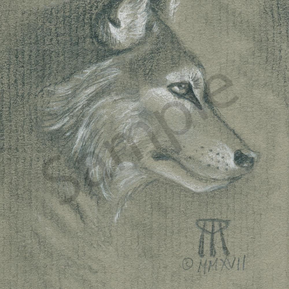 Timber wolf half tone cqkx9j