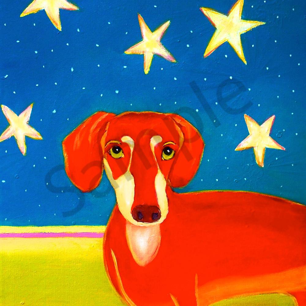 4th of july dog wt21b3