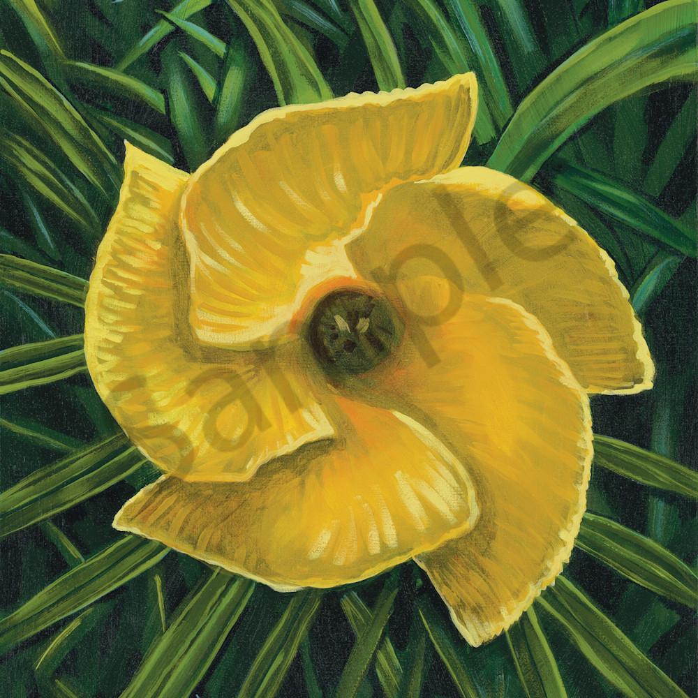 Afs big yellow flower wreevo