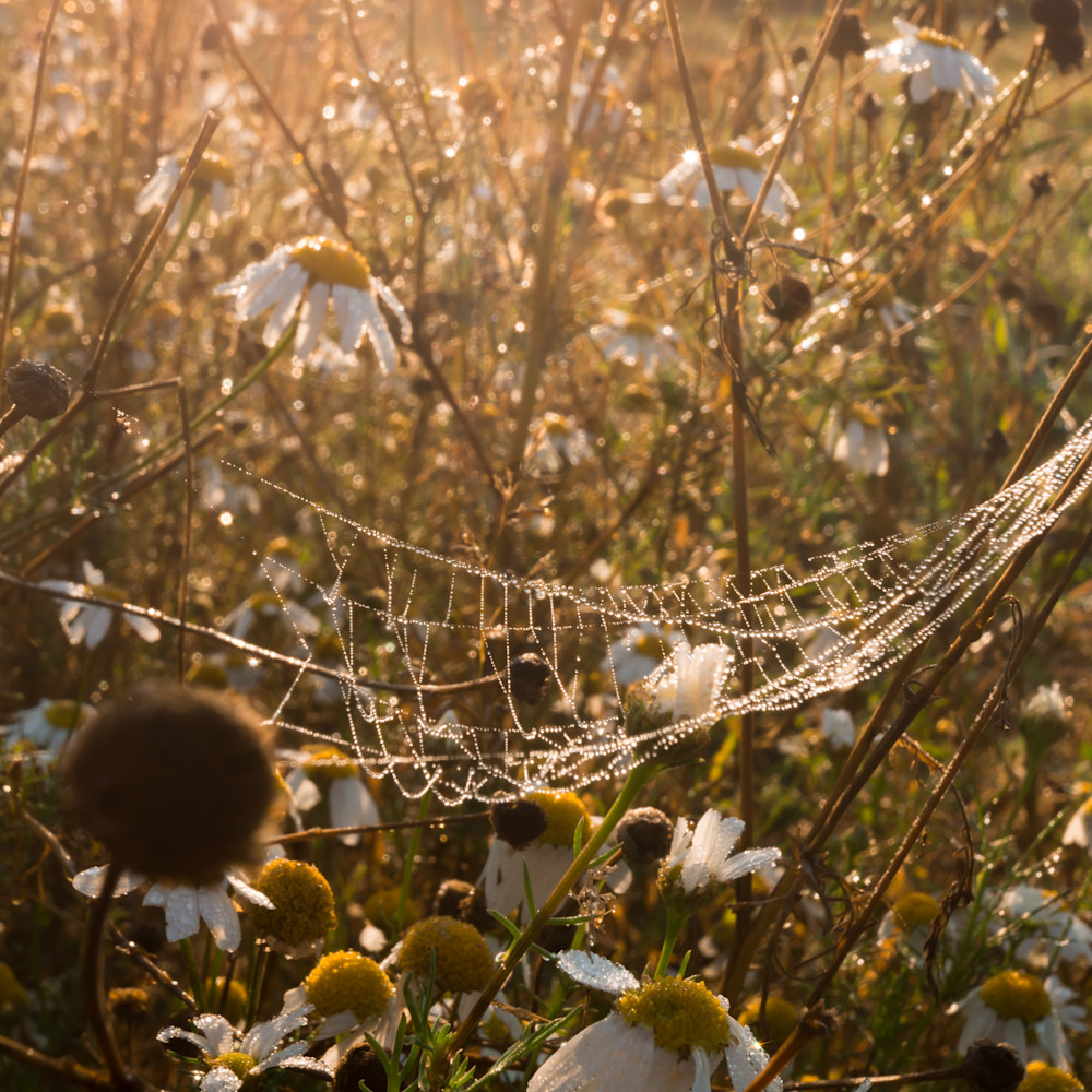 Dew in the field pt1s4a