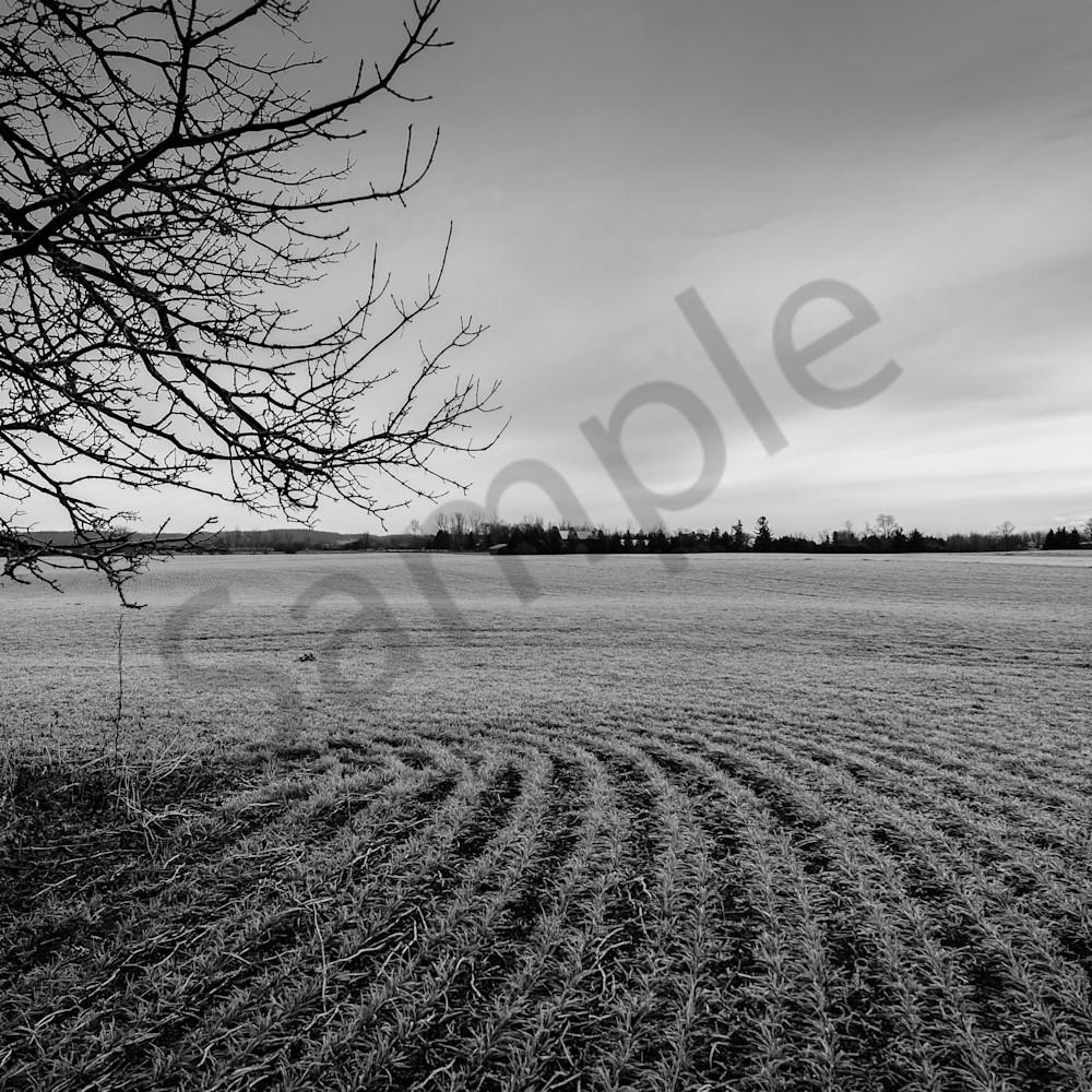 Barren field miwglc