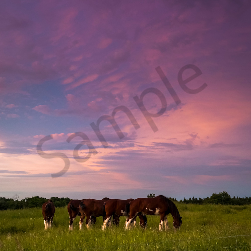 Grazing at sunset ggex0y