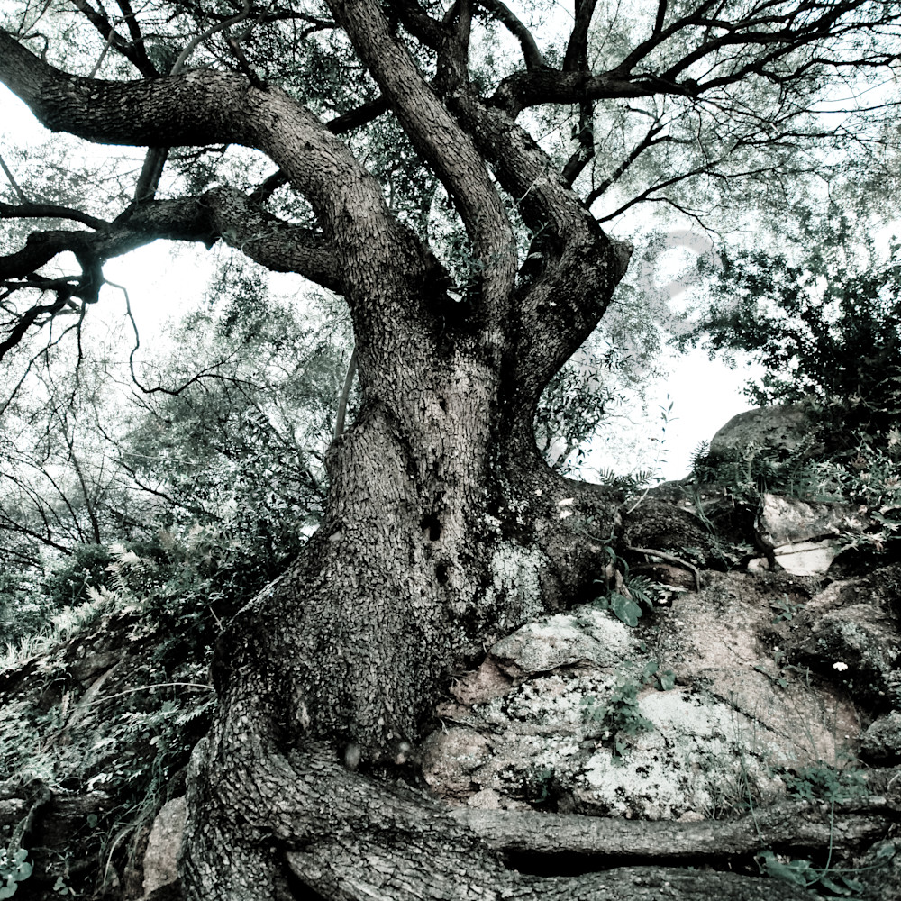 Strong roots by karen edmondson c6ywat